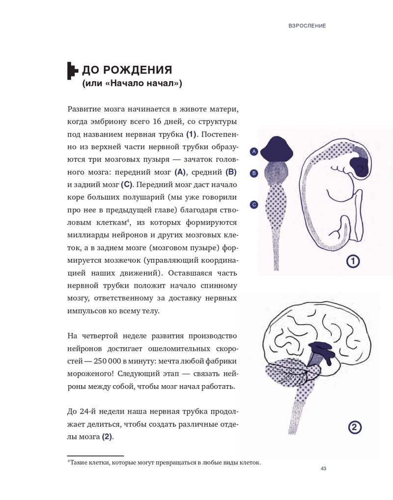 Отрывок из книги «Что там внутри? Путеводитель по нашему мозгу»
